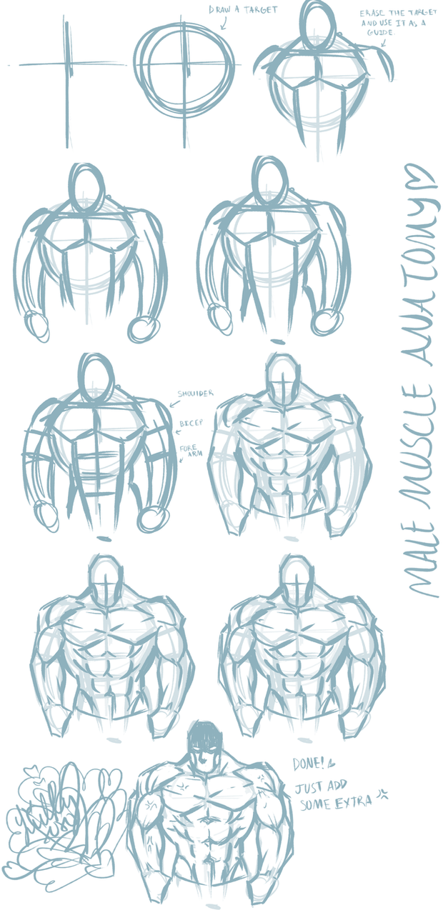 Basic Male Anatomy Tutorial Front View By Catthing On Deviantart