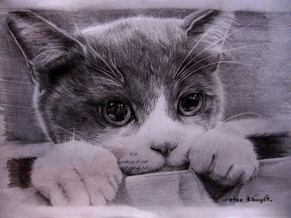 Cat drawing pencil by Gattanday on DeviantArt