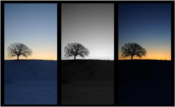 three trees.... by harmonyrose