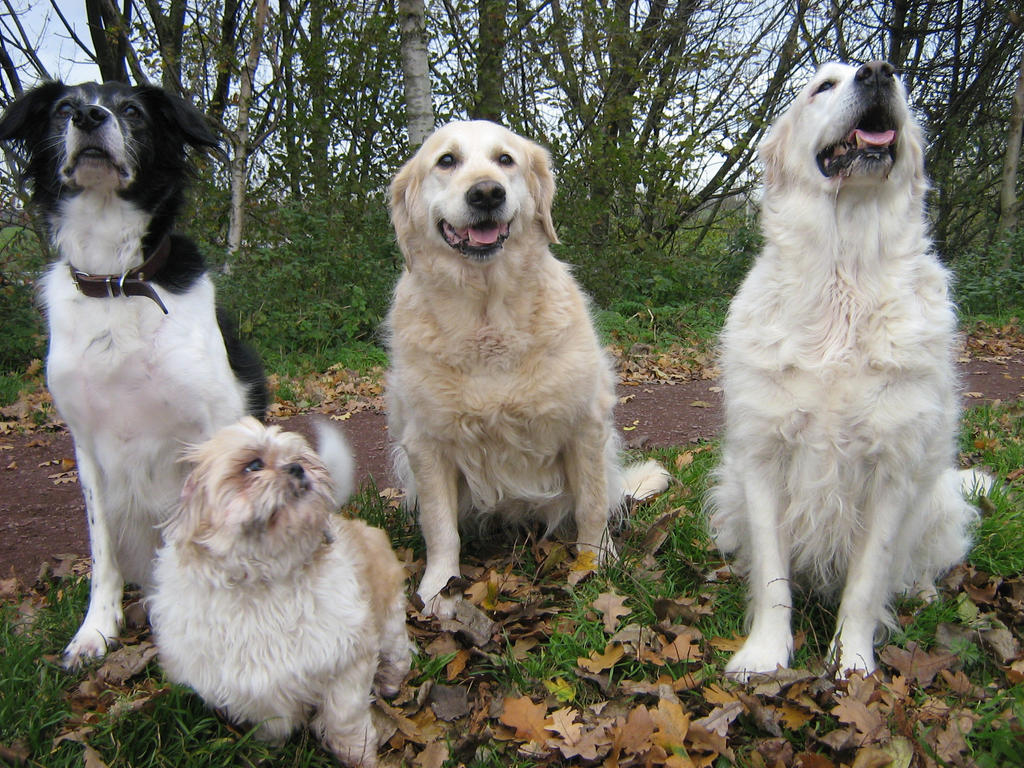 My four fave dogs...