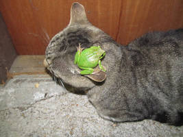 Kitten and Frog 2