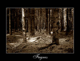 Fagnes by pat007