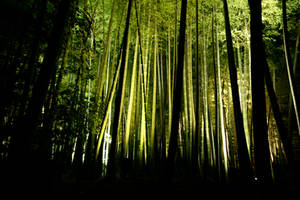 Bamboo Shoots by Thrill-Seeker
