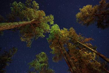 Grand Canyon Stars