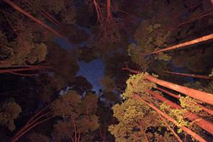 Fraser Island Stars by Thrill-Seeker