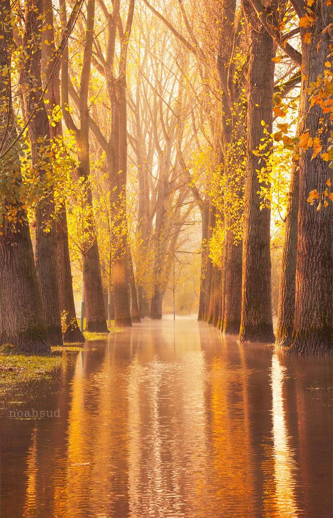 Waltzing Wood