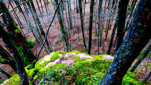 Wallpaper (Alsace 2015) - 03 by Feuerfeder