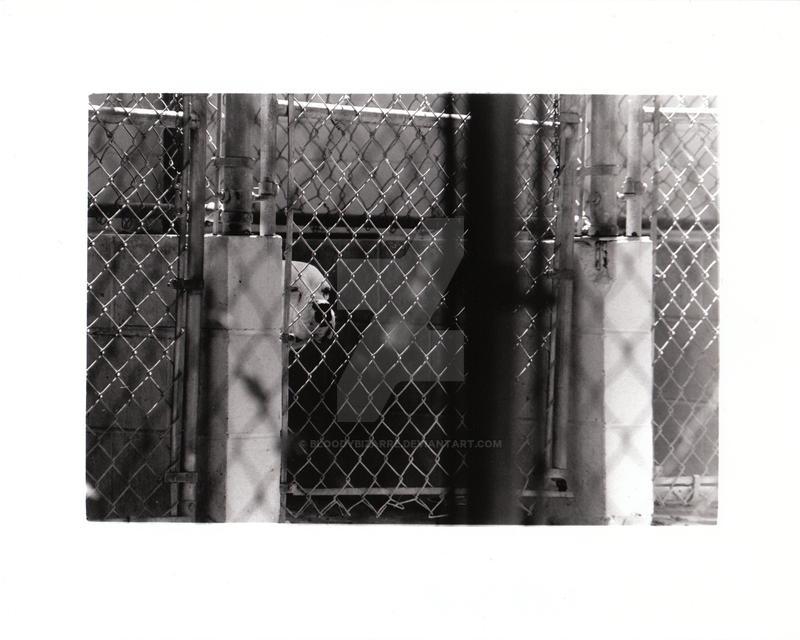 Humane Society 1 by BloodyBizarre