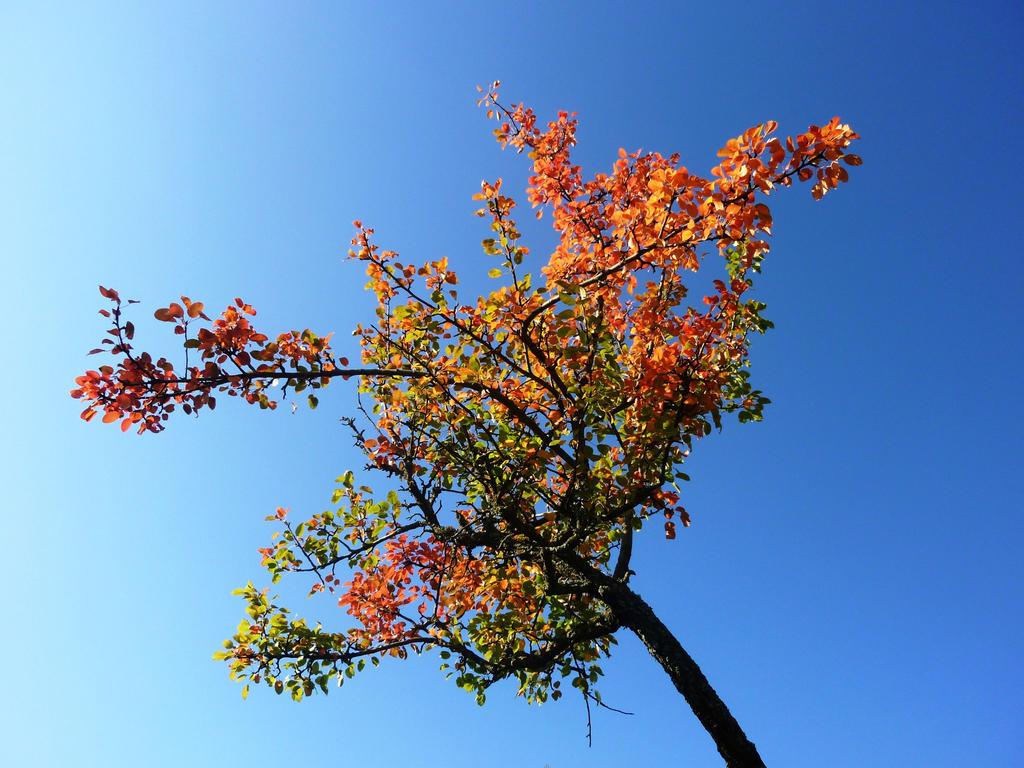 Ye Olde Decading Tree by AdMalamCrucem