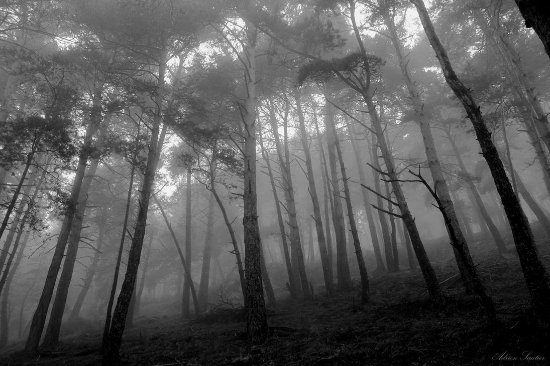 Woods of Desolation by AdMalamCrucem