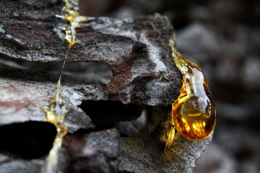 One More Drop of Amber