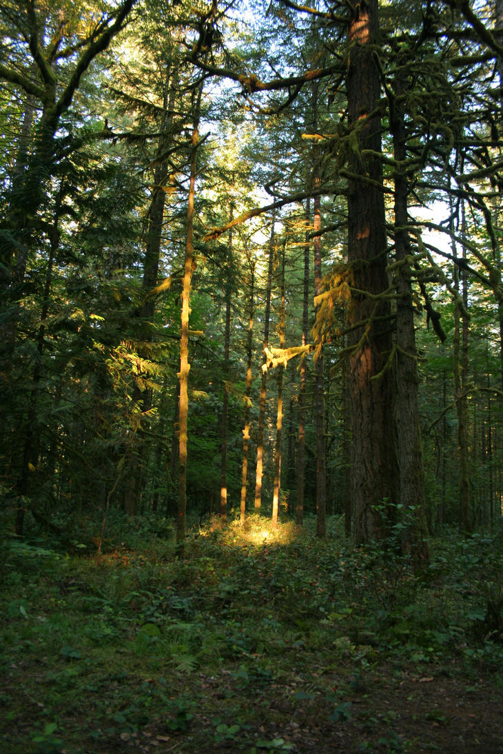 Hallowed grove by Karinta