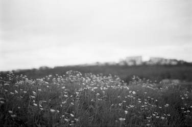 Flowerfield by Karinta