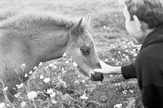Equine contact