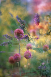 Wildflower mosaic by Karinta