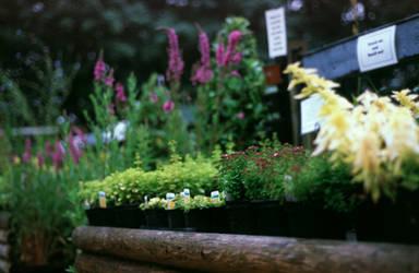 The Herb Farm by Karinta