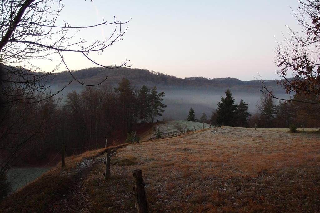 Frosty morning I by DevilishEvelyn