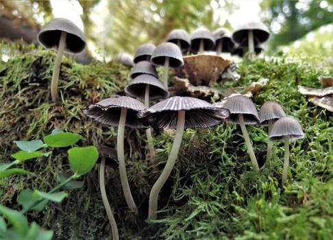 Group o' mushrooms