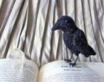 Raven needle-felt