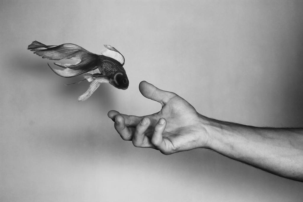 Flying fish by iuv89