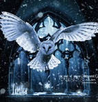 The Owl of Winter (Remastered II)