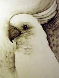 in memory of patrick my cockatoo