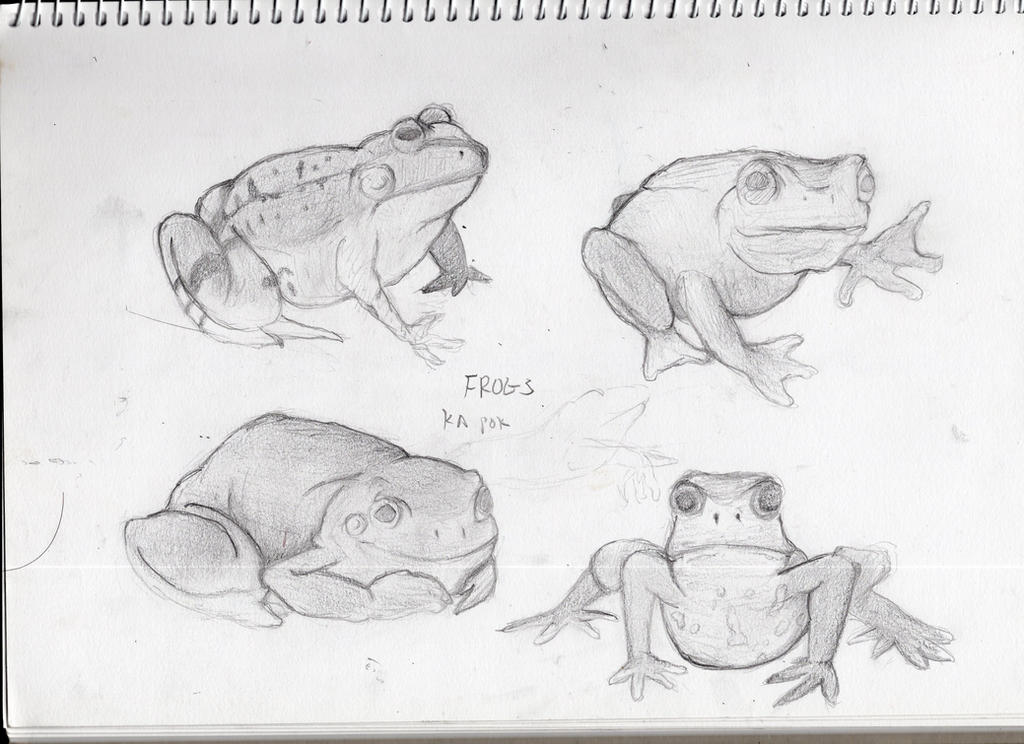 Frogge sketch by ChromeFlames
