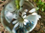 Glaskugel,Stein und Blumen by ebi46