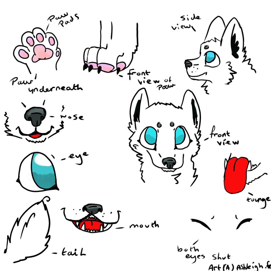 wolf anatomy help by P0CKYY on DeviantArt