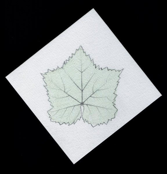 Final project - Leaf by ManicMechE