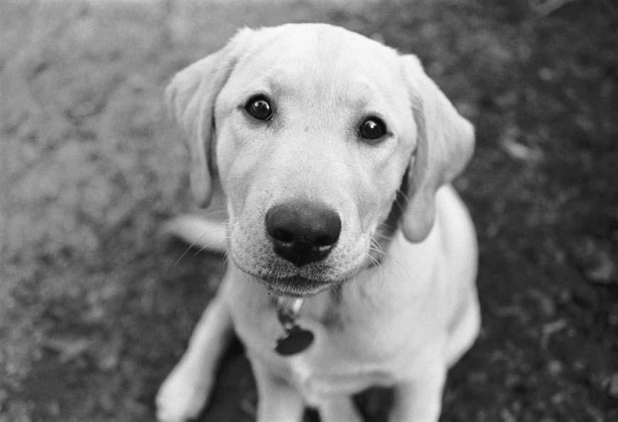 Sierra as a puppy by ManicMechE