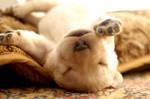 Sierra puppies 20