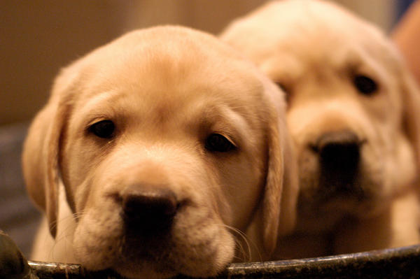 Sierra puppies 55 by ManicMechE