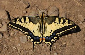 Motylek by NightKn8
