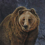 The Heavyweight - Grizzly