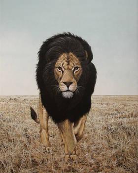 The Black Maned Lion