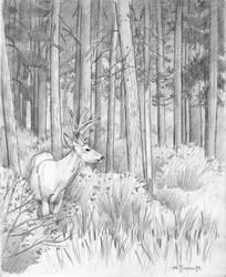 Whitetailed Deer near Banff by CitizenOlek