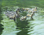 Mallard with Ducklings