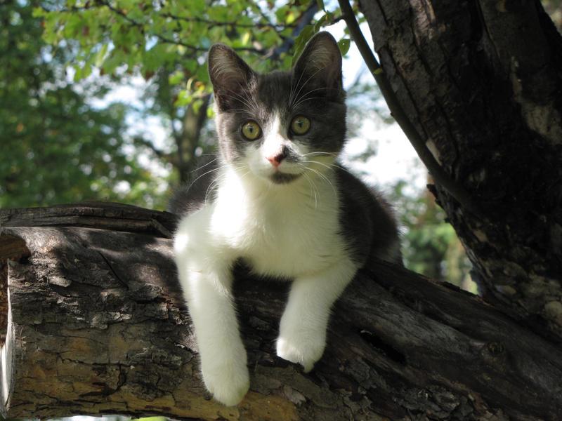 Bailey up a Tree 1080