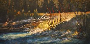 Luminous Johnsons Creek