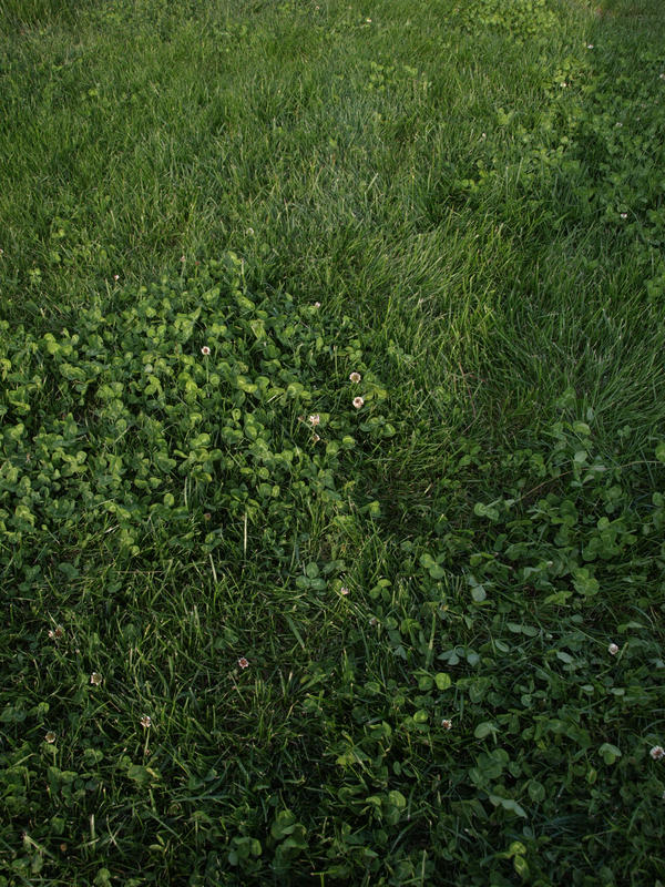 Grass and Clovers - texture by Noree-stock