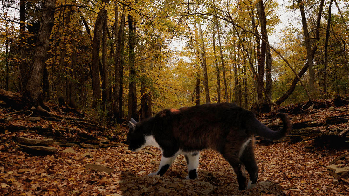 wood cat by pony701