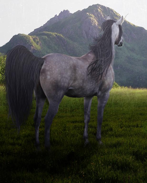 wind by pony701