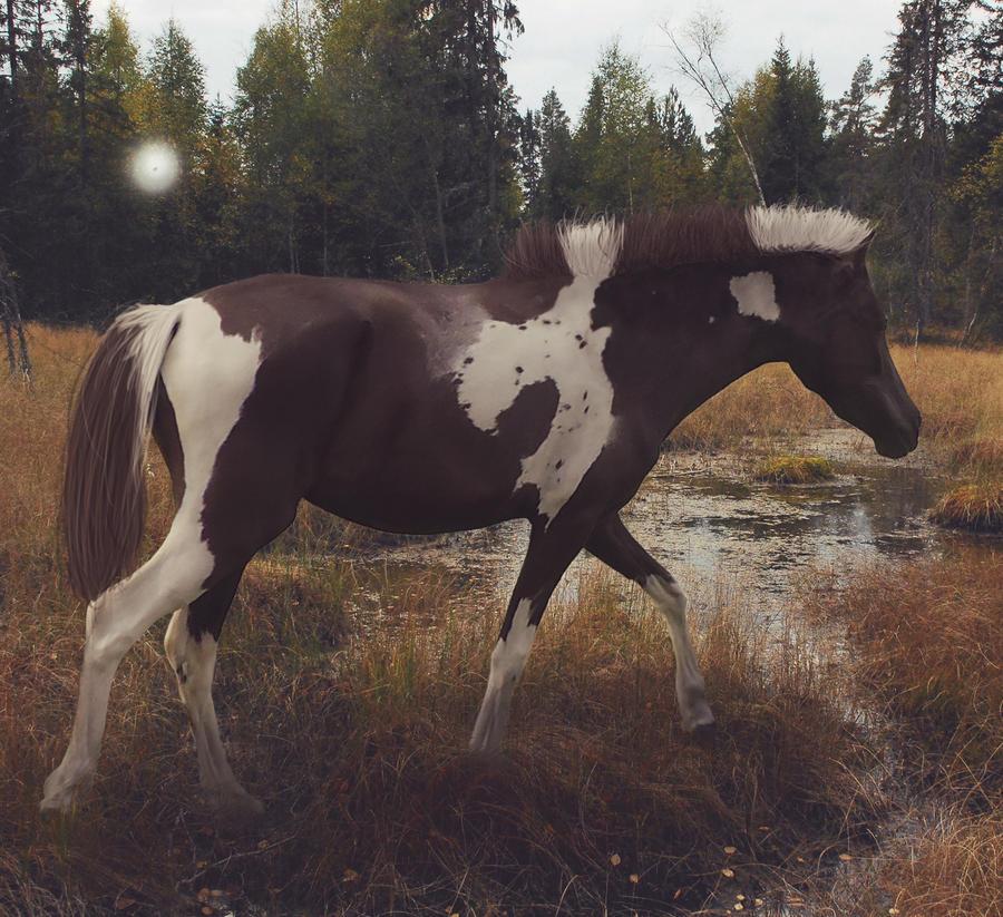 marsh pone by pony701
