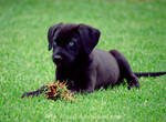 Eating grass..
