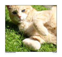 Cat Blueyes by CaptainNuss