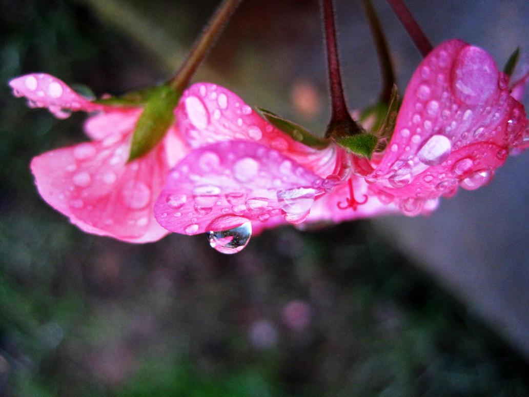 California Rain by ghostcharmer