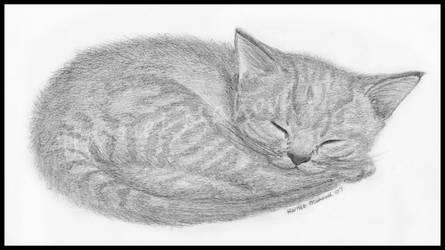 Kitten by Super-Pleb