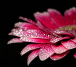 Pink Droplets_1