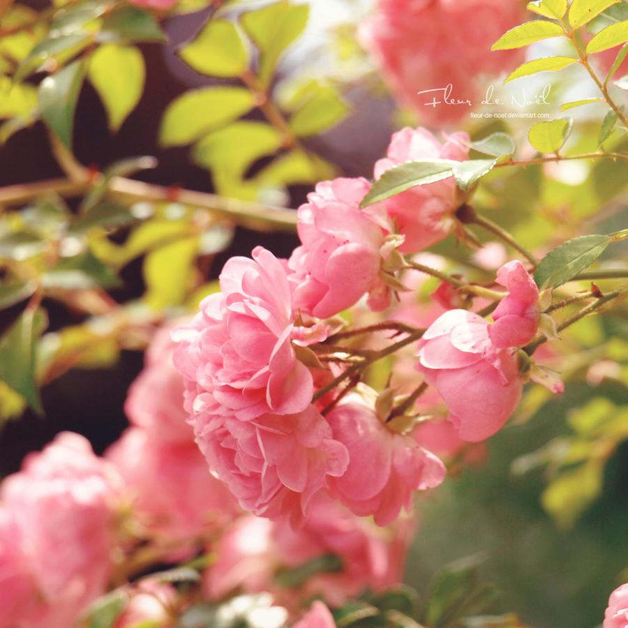 Afternoon Romance by Fleur-de-Noel